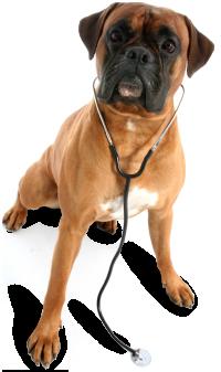 Ard-Vista Animal Hospital - Veterinarian in Winston-Salem, NC US